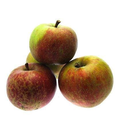 Obrazek Jabłka szara reneta luz